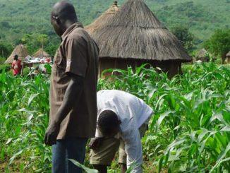SMALL FARM edutorial
